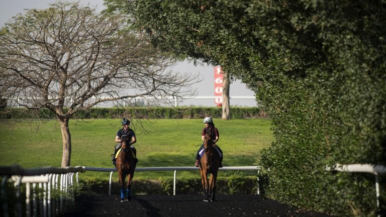 Heading home: Big Orange (Gilly Dolman) and Monarchs Glen (Tony Proctor) walk off the training track