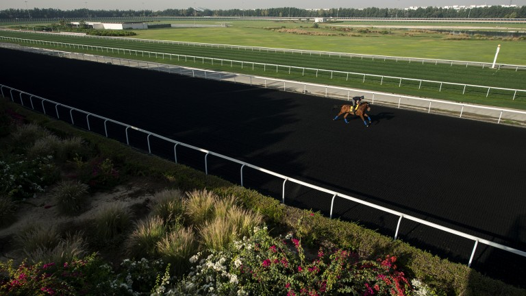 Out on his own: Monarchs Glen (Tony Proctor) continues his preparation for Saturday's Dubai Turf