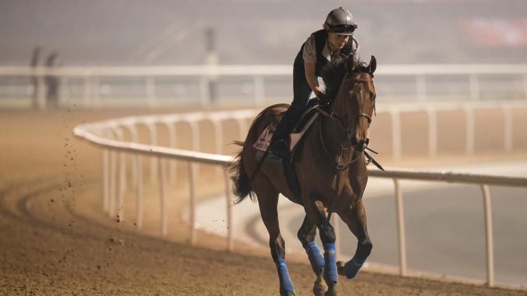 Dubai World Cup favourite, the Bob Baffert-trained West Coast, exercises at Meydan