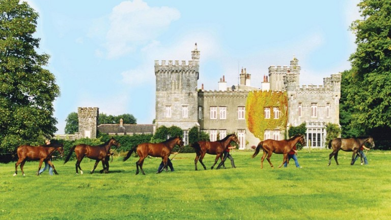 Tullamaine Castle Stud: magnificent property is on the market