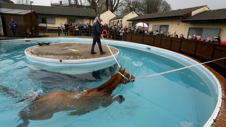 Mark Johnston's equine pool was one of the big attractions at the Middleham open day