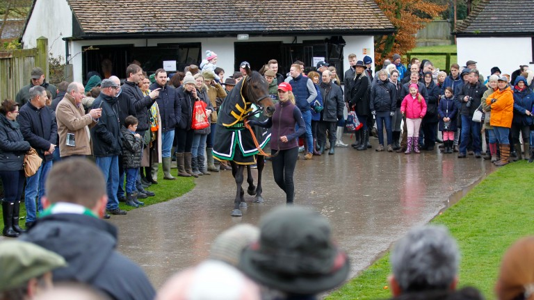 Champion Hurdle winner Buveur D'Air is paraded at Seven Barrows