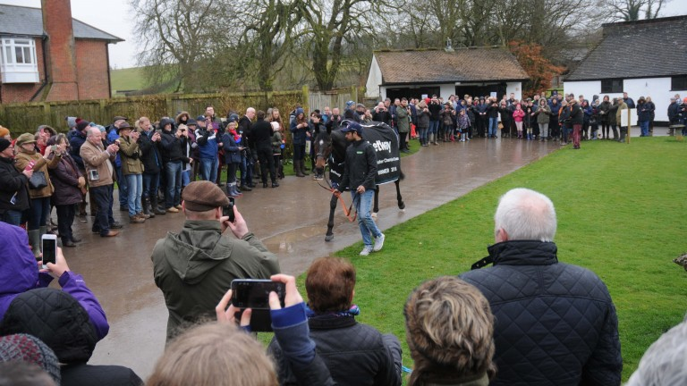 Champion Chase hero Altior is the centre of attention at Seven Barrows
