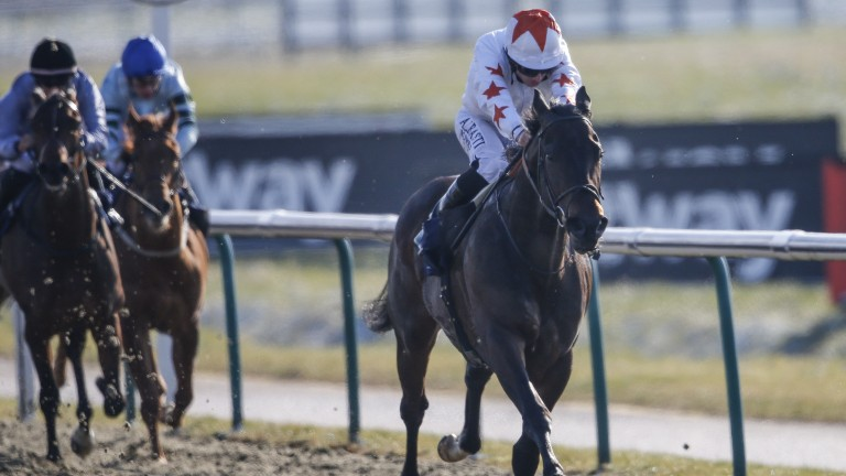 Walk In The Sun wins at Lingfield in February. The colt is reported to have subsequently tested positive for cocaine