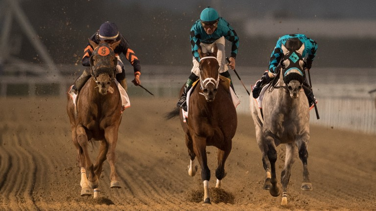 Mind Your Biscuits (left): wins the 2018 running of the Golden Shaheen