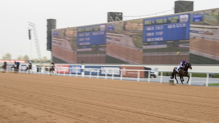 By a distance: Mendelssohn is clear of the rest in the UAE Derby