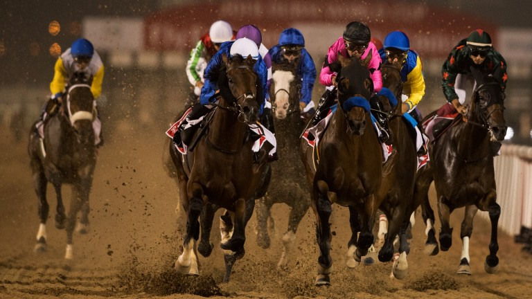 World class field: The Dubai World Cup runners led by Thunder Snow