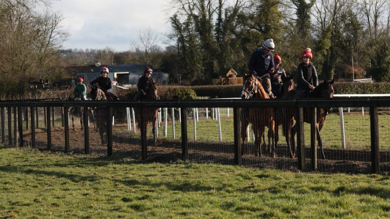 The Bansha House juveniles stretch their legs out on the circular gallop