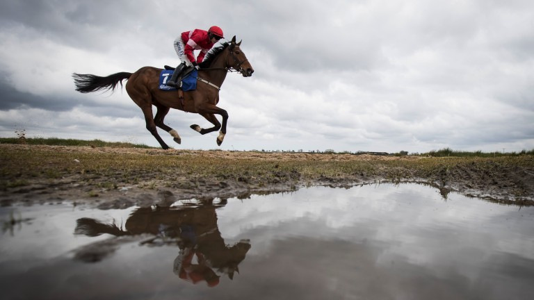 Whatever the weather she's just ace: Laurina whistles past a puddle before recording another effortless Grade 1 victory