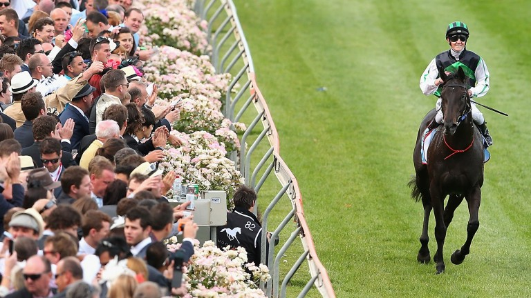 Shamus Award salutes the crowd after winning the Cox Plate