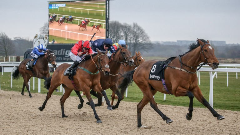 Stargazer (red and grey silks) 'beats' Island Brave (navy) at Newcastle on Friday