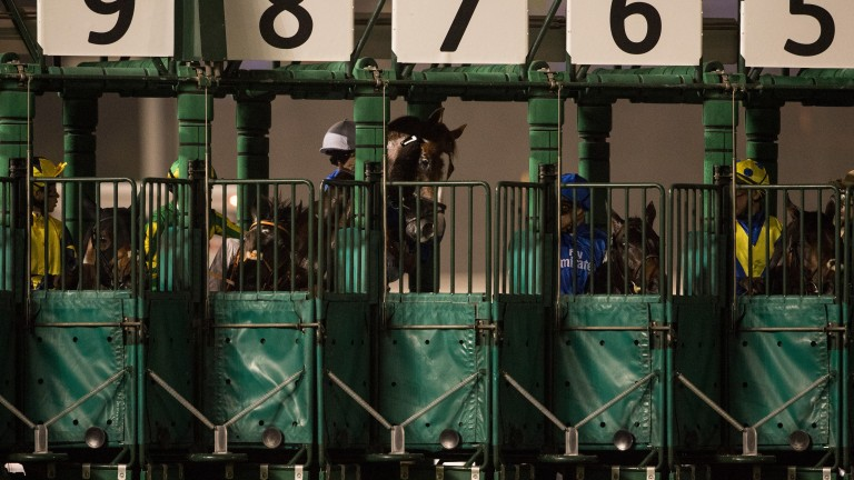 Hawkbill (stall 7) rears up in the stalls and tries to join Satono Crown (8) before the Dubai Sheema Classic.