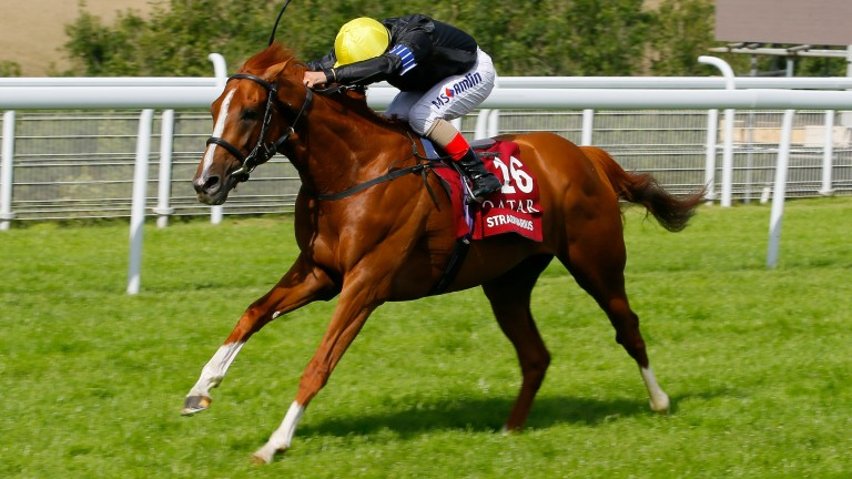 Stradivarius has what it takes to be a Cup horse this season