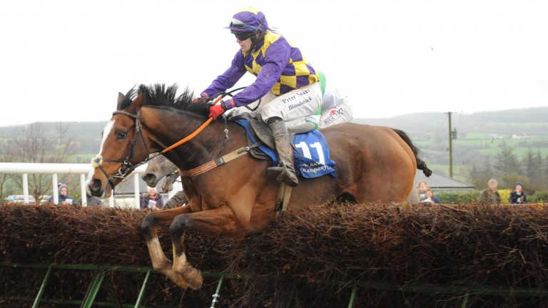 Clondaw Westie: pictured winning his point