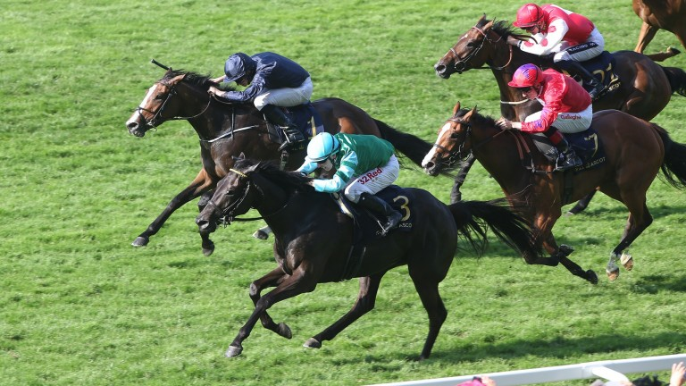 Paco's Angel (third, nearside): finished third in the Listed Sandringham Handicap at Royal Ascot