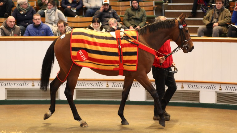 Willie John changed hands for 1,900,000 guineas at the Tattersalls February Sale