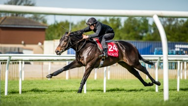 Micky Cleere puts Abel Handy through his paces at last year's Goffs UK Breeze-Up Sale