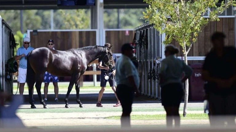 Inglis: inspections take place at Riverside Stables ahead of the Inglis Easter Yearling Sale