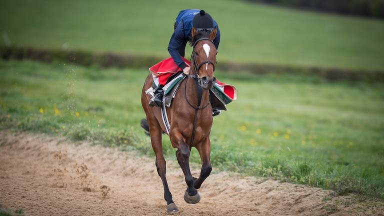 Alghabrah: the filly is said to have done well over the winter