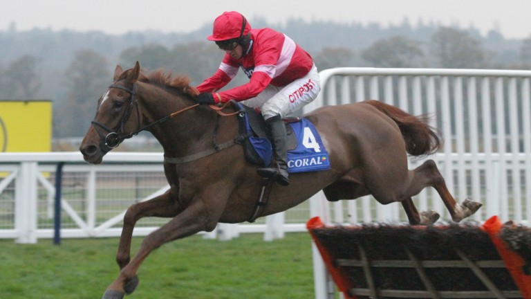 Early promise: Silviniaco Conti pings the final flight on his way to winning the Grade 2 Ascot Hurdle as a four-year-old
