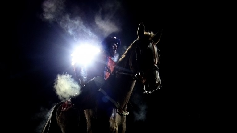 Which well-bred runners will be in the spotlight at Dundalk after the two-year-old maiden?