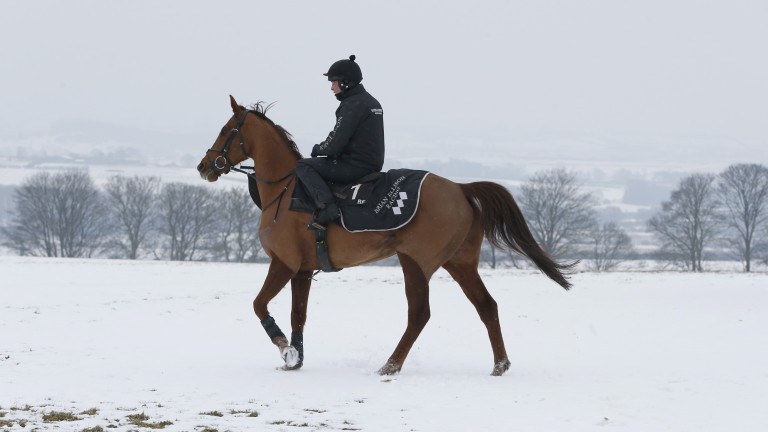 Definitly Red: bidding to leave his Betway Bowl rivals out in the cold