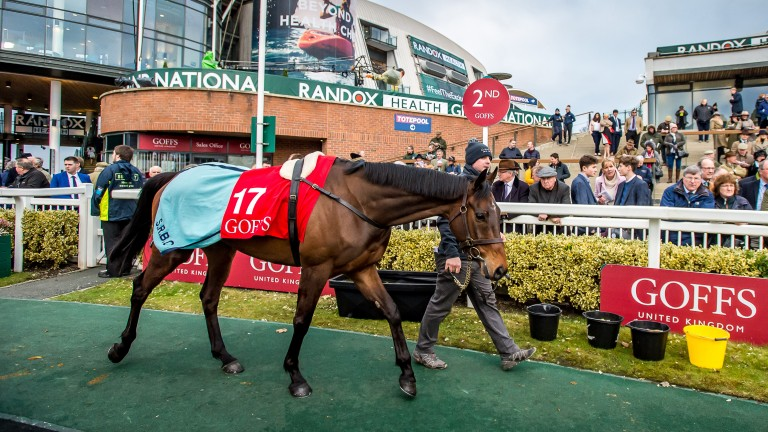 Malone Road selling for £325,000 at the Goffs UK Aintree Sale on Thursday