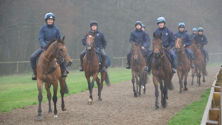 Newmarket pics for RP SundaySome of Ed Dunlop's string, slightly closer