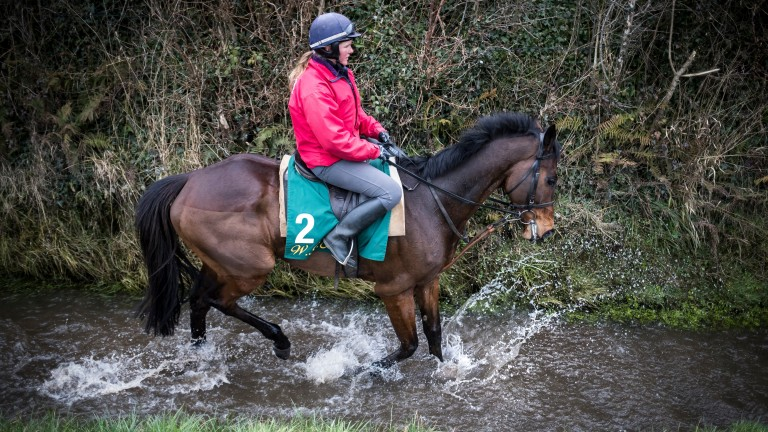 Douvan, at home ridden by Hollie Conte, is set for a Punchestown return after his Cheltenham fall