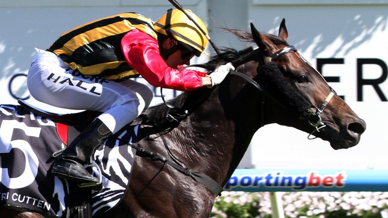 Spirit Of Boom on his way to winning the Caulfield Sprint in 2013