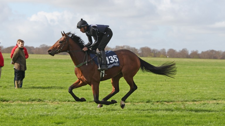 Lot 135: the Australia colt out of Happy Holly consigned by The Bloodstock Connection