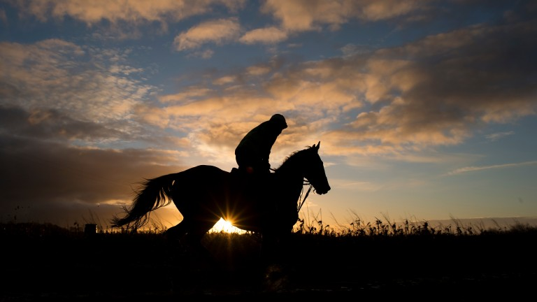 Cue Card gallops with the sun rising in the background