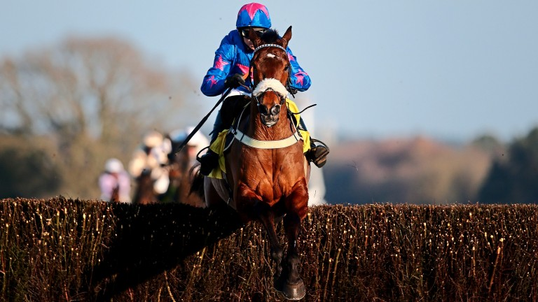Cue Card and Paddy en route to victory in the Ascot Chase, the popular runner's final Grade 1