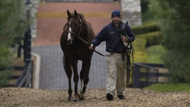 Giant's Causeway is led up the stallion walk at Ashford Stud by Gerry SheridanMay 20052000sHorseracing horse racingmirrorpix