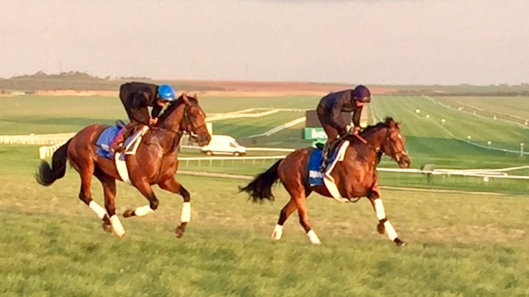 Ghaiyyath (William Buick) and Ispolini  (James Doyle) finish out their workout