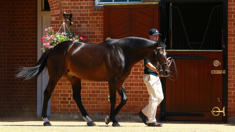With You is the 21st stakes winner for Juddmonte's Dansili
