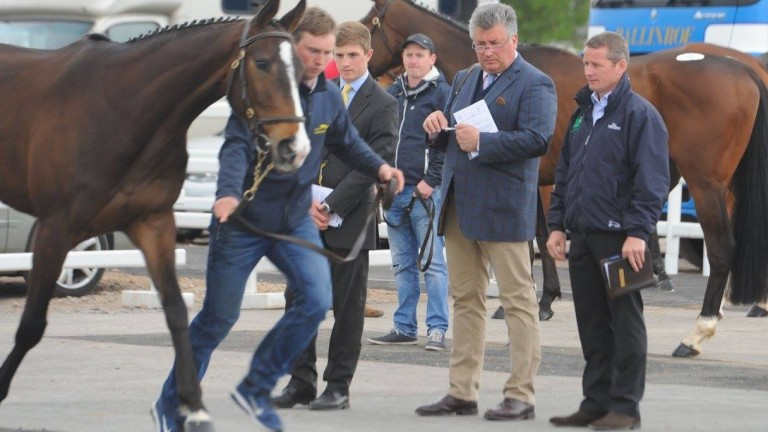 Paul Nicholls and Tom Malone inspecting lots at last year's Cheltenham April Sale