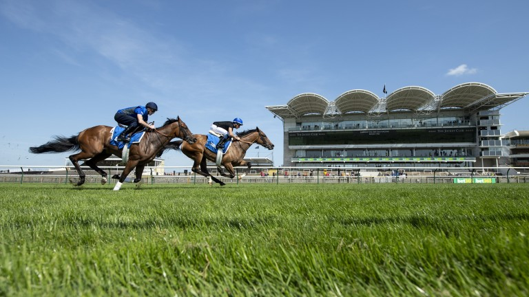 Early blowout: Classic hope Wild Illusion (far; William Buick) leads Night Castle and James Doyle in a racecourse gallop