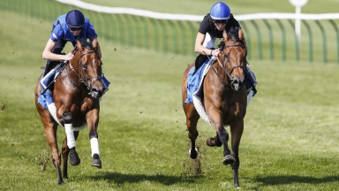 Wild Illusion (William Buick, right) goes through her paces on the Rowley Mile with Night Castle (James Doyle)