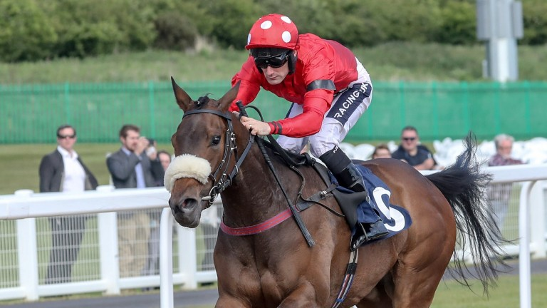 Mabs Cross: may not be suited by track says trainer Michael Dods