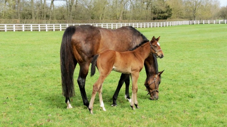 Zarkamiya pictured as a foal at two weeks old with her dam Zarkava