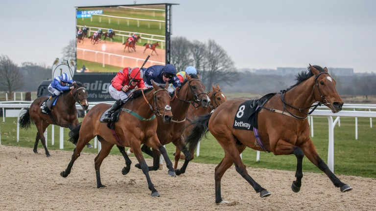 Stargazer (Kevin Stott, nearside) just gets the better of Island Brave (Luke Morris, navy) at Newcastle on Good Friday before being demoted by the local stewards