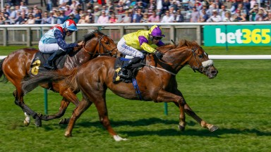 Brando (right) gets the better of Sir Dancealot to win the Abernant Stakes at Newmarket for the second year running