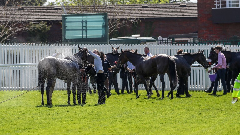 Horses are cooled down after the finish of a race at Cheltenham this year