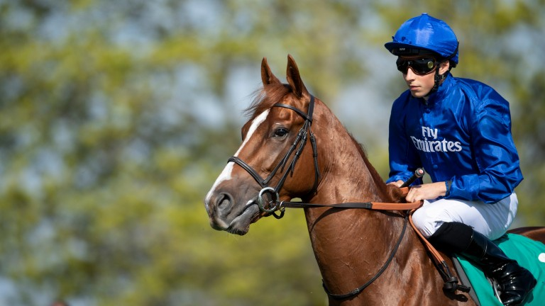 Masar: winner of the 2018 Derby and Dalham Hall resident