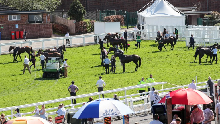 Horses are cooled at Cheltenham as the bookmakers seek shade under their umbrellas