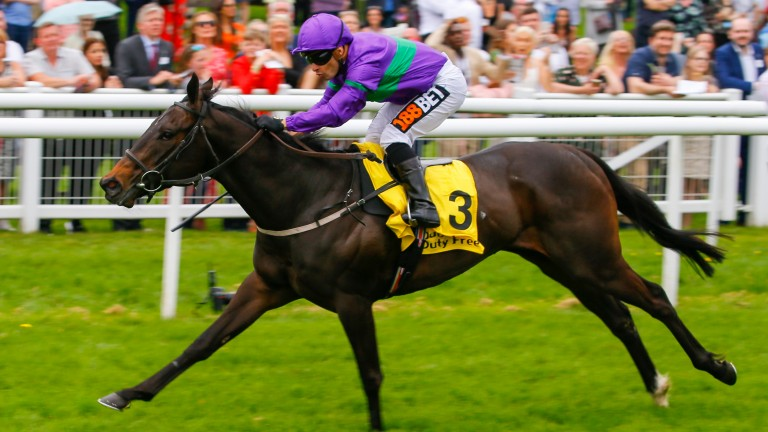 Dan's Dream: set to line up at Newmarket on Sunday