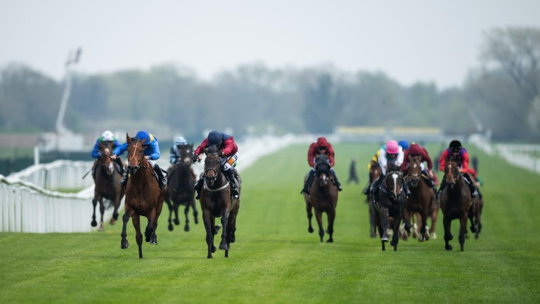 All to play for: a head-on view of the runners in the opener won by 50-1 shot Adjutant and Jim Crowley (blue silks)