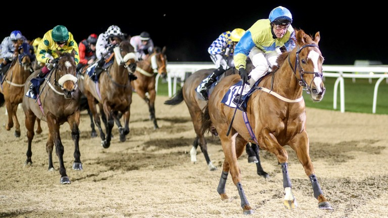 Foolaad: switches to turf at in a £25,000 sprint at Ponetfract