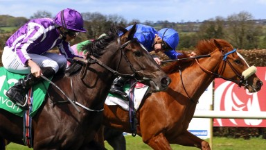 Flying filly: So Perfect (purple), a daughter of Scat Daddy, storms home to make an impressive winning debut
